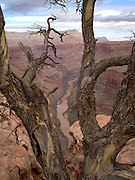 View from the Toroweap Overlook, North Rim, Grand Canyon National Park, Arizona, US