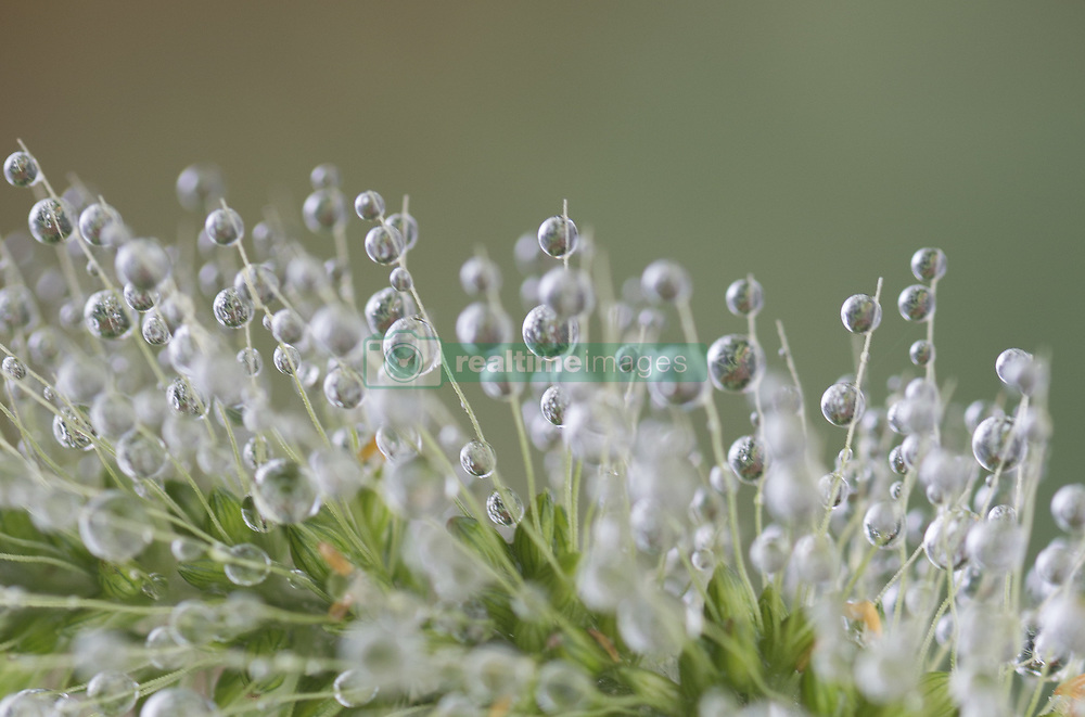 July 6, 2018 - Huayin, China - Macro photography of dew on leaves in Huaying, southwest China's Sichuan Province. (Credit Image: © SIPA Asia via ZUMA Wire)