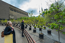 © Licensed to London News Pictures. 04/05/2021. LONDON, UK. Staff members view Beuys' Acorns, an installation of 100 oak saplings all grown from acorns by British artists Ackroyd & Harvey which has opened outside Tate Modern.  The work, begun in 2007, marks 100 years since the birth of Joseph Beuys (1921-86), the hugely influential artist and environmental activist. On show 4 May to 14 November 2021, it is a living sculpture where visitors can reconnect with art from lockdown, rethink their relationship to nature, and reflect on art, activism and the climate emergency.  Photo credit: Stephen Chung/LNP