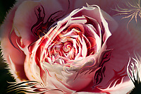 pink rose blossom like abstract image with central vortex and fluid floating natural shapes