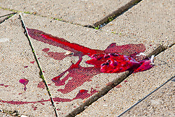 © Licensed to London News Pictures. 01/12/2019. Brighton, UK. WARNING - GRAPHIC CONTENT - Blood can be seen ON THE PAVEMENT at a scenes of crime on Marine Parade in Brighton and Hove after 3 men were hit by a car in the aftermath of a mass fight at 5AM on Sunday Morning. 2 people are in hospital with serious head injuries. The police investigation is continuing. Photo credit: Hugo Michiels/LNP