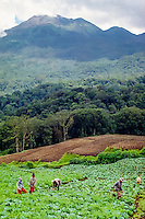 Java, East Java, Batu. Farming on the slopes of a volcano. Close to the hot springs in Songgoriti west of Batu.