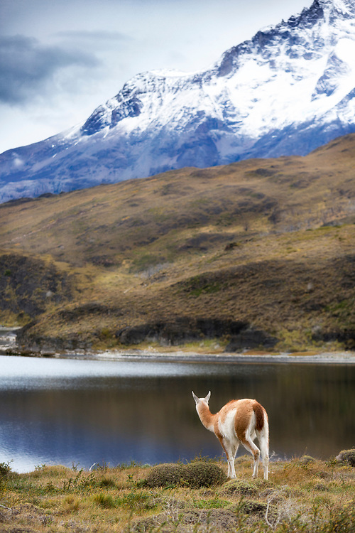 """A guanaco views the granite peaks from afar  <br /> <br /> 18"""" x 12""""<br /> <br /> See Pricing page for more information.<br /> <br /> Please contact me for custom sizes and print options including canvas wraps, metal prints, assorted paper options, etc. <br /> <br /> I enjoy working with buyers to help them with all their home and commercial wall art needs."""