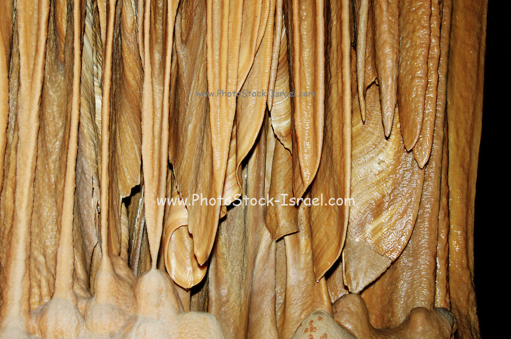 Elephant ears at The Stalactite Cave Nature Reserve (also called Soreq Cave) 82-meter-long, 60-meter-wide cave is on the western slopes of the Judean Hills outside the city of Beit Shemesh. Sorek Cave is famous for its beautiful formations. Stalactites and stalagmites, but also many other forms of speleothems, especially calcite crystals, helictites and cave coral,