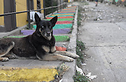 A street dog rests on some colorful steps in Cerro Alegre, Valparaiso.