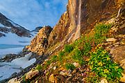 Groundsel (Senecio sp.) and purple monkey-flower (Mimulus lewisii) grow under snowmelt waterfalls in Colonial Glacier basin, North Cascades National Park, Washington.