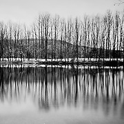 Naked trees by Sanabria lake