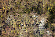 Nederland, Zuid-Holland, Nieuwkoop, 20-03-2009. Kale bomen in een bos, bedekt met vogelpoep. Bare trees covered in bird droppings..Swart collectie, luchtfoto (toeslag); Swart Collection, aerial photo (additional fee required); .foto Siebe Swart / photo Siebe Swart