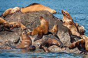 Sea lions. Cruise to Tracy Arm Fjord and South Sawyer Glacier from Juneau, Alaska, USA. We highly recommend the smoothly stabilized day cruise aboard the 56-foot boat Adventure Bound. This journey to the heart of Tracy Arm-Fords Terror Wilderness (Tongass National Forest) rivals Norwegian fjords and adds a punchbowl of icebergs from the spectacular South Sawyer Glacier, which calved ice into the tidewater with a rumble and a splash. Whales, bears, sea lions and other wildlife showed up along the way. The fjord twists narrowly 30 miles into the coastal mountains, with peaks jutting up to a mile high, draped with tumbling waterfalls.