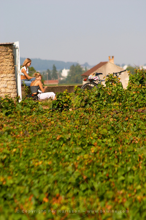 Vineyard. Two young women with bicycle resting. Beaune, Cote d'Or, Burgundy, France