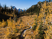 From the flanks of Carne Mountain, look into Glacier Peak Wilderness Area to see Buck Mountain (8573 feet). By hiking Carne Mountain in mid-October you can see beautiful golden larch tree fall needle colors at their peak. The winding Carne Mountain trail steadily ascends 3600 feet in 7 miles round trip. On October 28, 2006, we were about a week or two past the best larch needle colors. Carne Mountain is located north of Lake Wenatchee (a side trip from US Highway 2) in Wenatchee National Forest, where the Chiwawa River meets Phelps Creek.