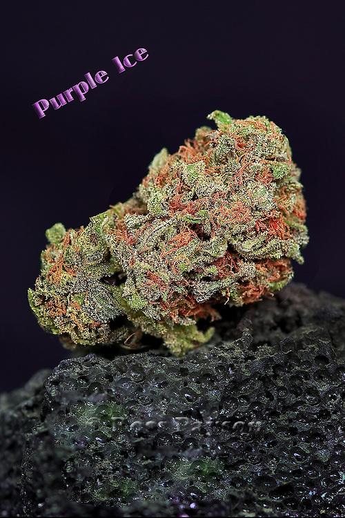 Fine art cannabis / marijuana photos