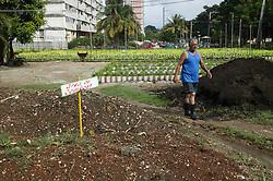 Working at La Sazon organic garden in Havana; Cuba compost heap,