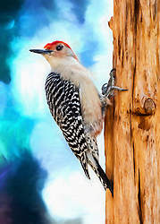 A Bold and Vibrant Red-Bellied Woodpecker Posted On A Tree Stump Poses For The Camera Against Painterly Blue Skies.