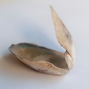 Open double clam shell still held together on white background
