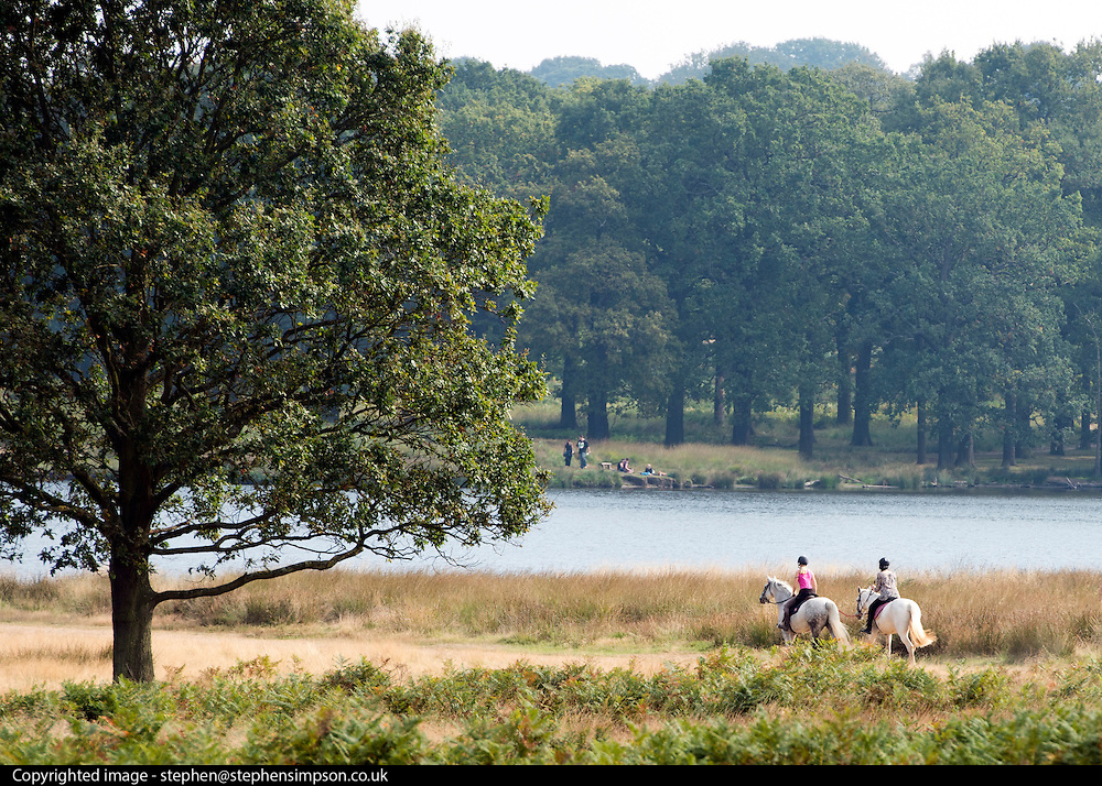 © Licensed to London News Pictures. 18/09/2014. Richmond, UK People ride their horses through Richmond Park, today 18th September 2014, in the warm weather. Photo credit : Stephen Simpson/LNP