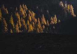 THEMENBILD - herbstlich gefärbte Nadelbäume bei Sonnenuntergang bei einer Wanderung zum Wildsee mit dem Wildseeloderhaus, aufgenommen am 20. Oktober 2018 in Fieberbrunn, Österreich // autumnal colored coniferous trees at sunset during a hike to the Wildsee with the Wildseeloderhaus, Fieberbrunn, Austria on 2018/10/20. EXPA Pictures © 2018, PhotoCredit: EXPA/ JFK
