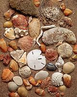 Still life of seashells.