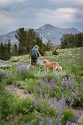 Woman hiking with dog (golden retrievers) among wildflowers in the Sierra Nevada, Mokelumne Wilderness, Eldorado National Forest, California