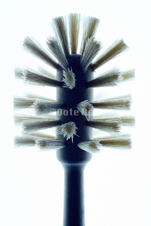wooden dish brush with white bristles