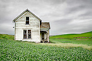 This abandoned Victorian house stands weathering in a field of wheat near Pullman, Washington, in the Palouse Country.