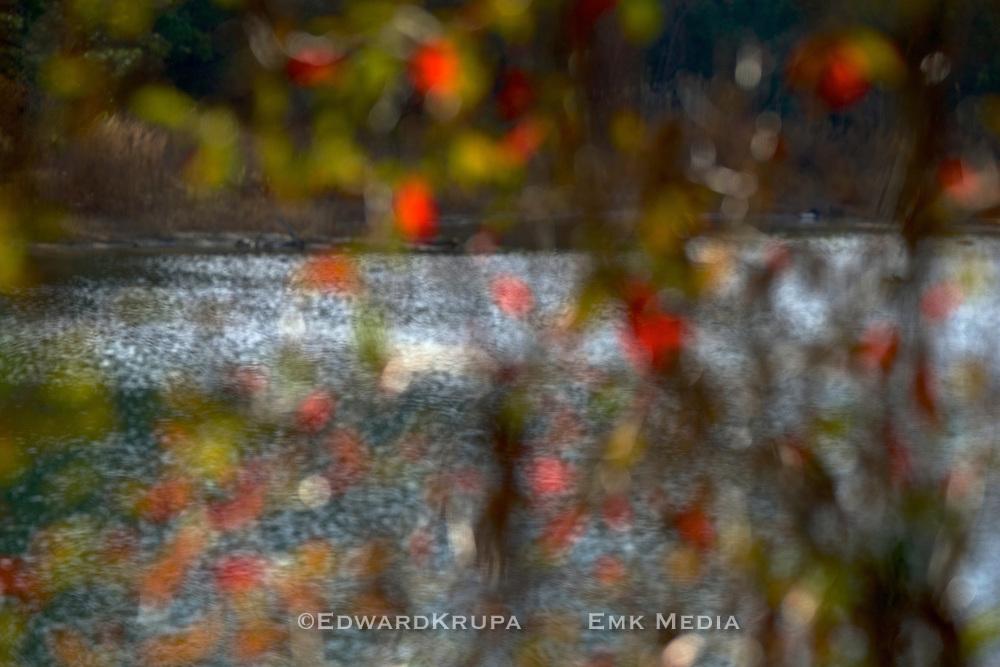 Abstract autumn pond.