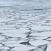 A polar bear makes its way across broken ice of the Beaufort Sea.