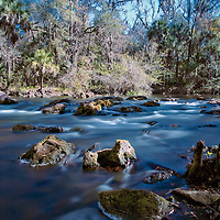 The rapids at Hillsborough River State Park. We totally trespassed and a park ranger kicked us out from riverbank.