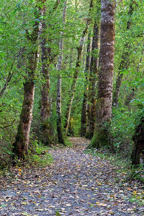 The Tavistock Loop Trail at Brae Island Regional Park in Langley, British Columbia, Canada