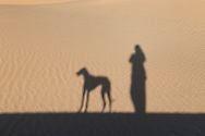 Shadow of a person with a Sloughi dog (Arabian greyhound) against sand dunes in the Sahara desert of Morocco.