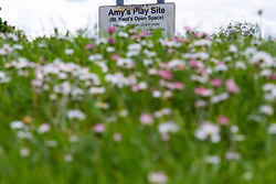 Wildflowers bloom near Amy's Play Site in St Neot's Open Space. With a fourth person charged for the murder of 17 year-old Jodie Chesney, purple themed tributes, including a garden,  can be seen at St Neot's Open space. Romford, London, May 27 2019.