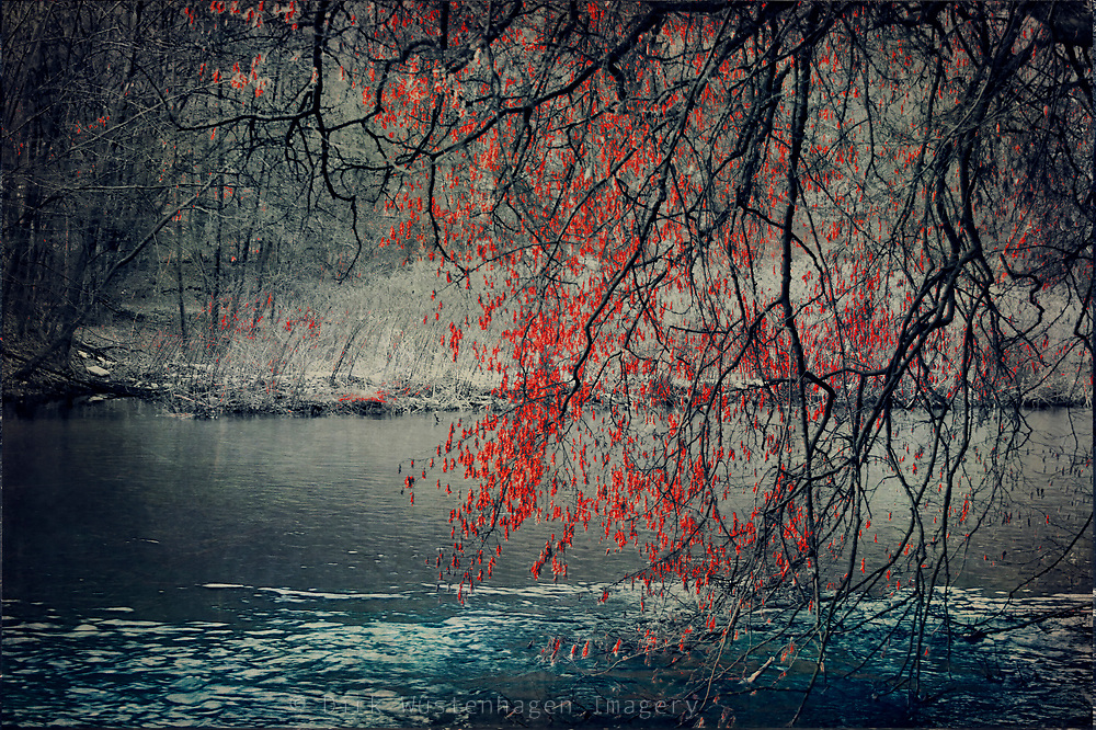 Last leaves on an  overhanging tree by the river.<br /> <br /> Prints: https://society6.com/product/by-the-river-e37_stretched-canvas#s6-699366p16a6v28