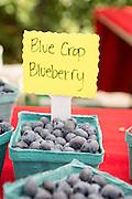Blue Crop Blueberries