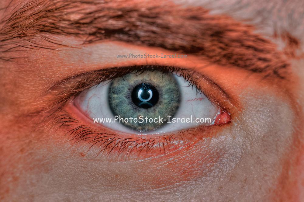Extreme closeup of a human eye grey