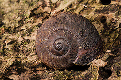 Snail, unknown