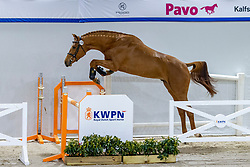 138, Nova Fan E Five<br /> KWPN Hengstenkeuring 2021<br /> © Hippo Foto - Dirk Caremans<br />  03/02/2021