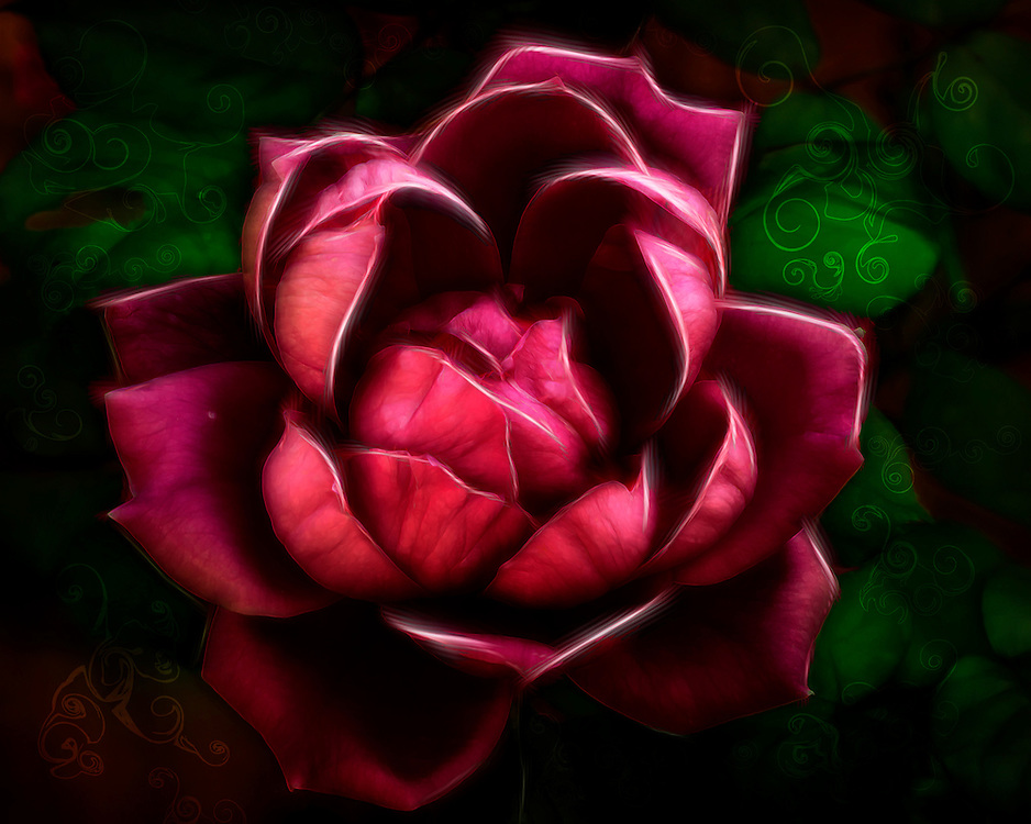 One of the new rose blooms from the garden. I was inspired on the processing from a shirt my wife has that has some tribal swirl patterns and roses on it.