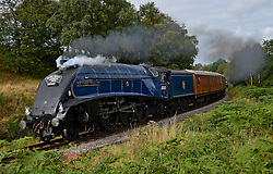 © Licensed to London News Pictures. 20/09/2015. North Yorkshire, UK. The A4 Pacific Class locomotive number 60007 Sir Nigel Gresley makes its way to Pickering, North Yorkshire on its final day of running before a major overhaul which may take up to three years at a cost of £600,000. Photo credit : Anna Gowthorpe/LNP
