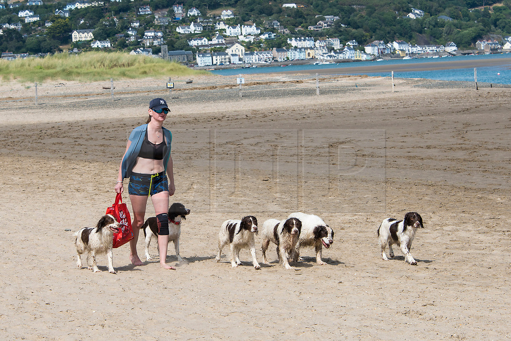© Licensed to London News Pictures. 29/07/2021. Borth, Ceredigio, Wales, UK. Sarah, dog trainer from Coventry exercises her English springer Spaniels on Borth beach in Ceredigion, Wales, UK. Photo credit: Graham M. Lawrence/LNP