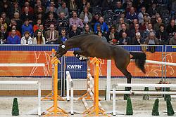 331 - Glory of Stud OMHG<br /> KWPN Stallion Selection - 's Hertogenbosch 2014<br /> © Dirk Caremans