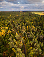 Aerial view of empty road hidden by surrounding forest on the island of Vormsi in Estonia