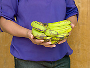 A woman from the local Women's farmer group in Sitio Matinao holding a bunch of bananas she is selling at Alamada market, Cotabato Province, Mindanao Island, The  In the Philippines climate change is contributing to an increase in the frequency and intensity of typhoons as well as a general rise in temperatures and rain leading to an increase in droughts, flash floods and landslides. This is having a huge impact on smallholder farmers who depend on one cash crop leaving them vulnerable to any changes in weather patterns. If their crops fail they are left with no other source of income for that year. In central Mindanao Oxfam is working with local partners and governments to increase awareness of climate change in poor communities and reduce the risks it creates to vulnerable farmers by supporting them in crop diversification.