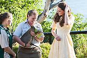 Duke and Duchess of Cambridge visit Taronga Zoo, Sydney , Australia. Catherine,Duchess of Cambridge meets a Quokka, 20 April 2014