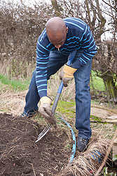Man digging out weeds on an allotment.