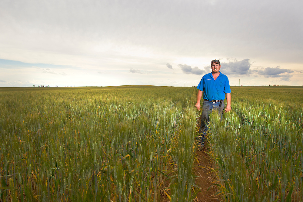Australian farmer Brent Morrish stands in his ripening wheat crop which Australian Plague Locusts will threaten and possibly devastate in the coming weeks in areas around Ouyen, Victoria, Australia.   After 10 years of drought, farmers are fearing major losses of what would otherwise be their first good crop in years.   The Victorian government has pledged $43.5million in support to help combat what could be the worst locust plague in over 75 years in South Eastern Australia with potential imapcts on agriculture of over $2 billion.