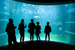 Visitors to large modern aquarium in Osaka looking into large fish tank