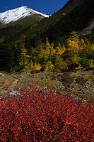 Autumn colours in a valley, Baima Snow Mountain Nature reserve, Yunnan, China