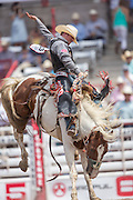 Saddle Bronc rider Jacobs Crawley hands on to Pretty Crazy at the Cheyenne Frontier Days rodeo at Frontier Park Arena July 24, 2015 in Cheyenne, Wyoming. Frontier Days celebrates the cowboy traditions of the west with a rodeo, parade and fair.