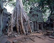 Built in 1186 as a Buddhist convent, Ta Phrom is one of Angkor's largest temples.  Trees and their roots from the nearby jungle invade the architecture.