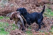 Lillycombe Shoot  5th December 2015